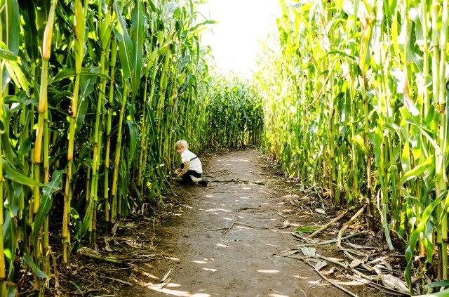 141005 bob's corn maze 004